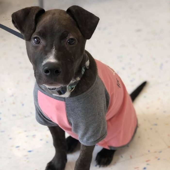 Meet Annette, Blue Ribbon News Pet of the Week