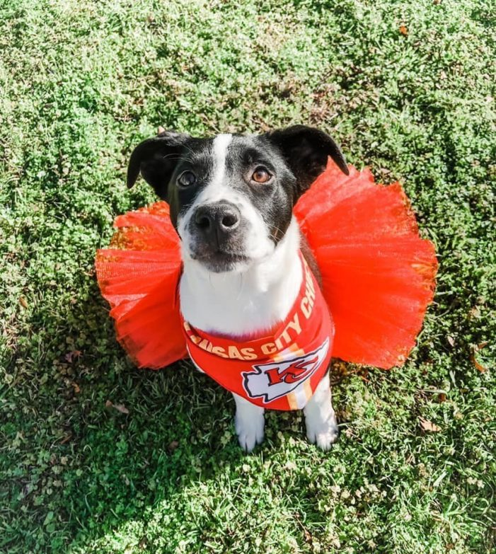 Meet Annie, Blue Ribbon News Pet of the Week