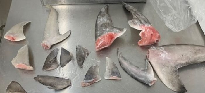Texas Game Wardens bite down on shark finning offenders in Houston, Dallas