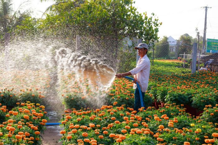 Rockwall County Master Gardener class on watering your garden effectively March 17