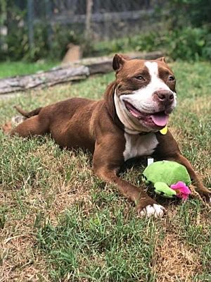 Meet Trina, Blue Ribbon News Pet of the Week