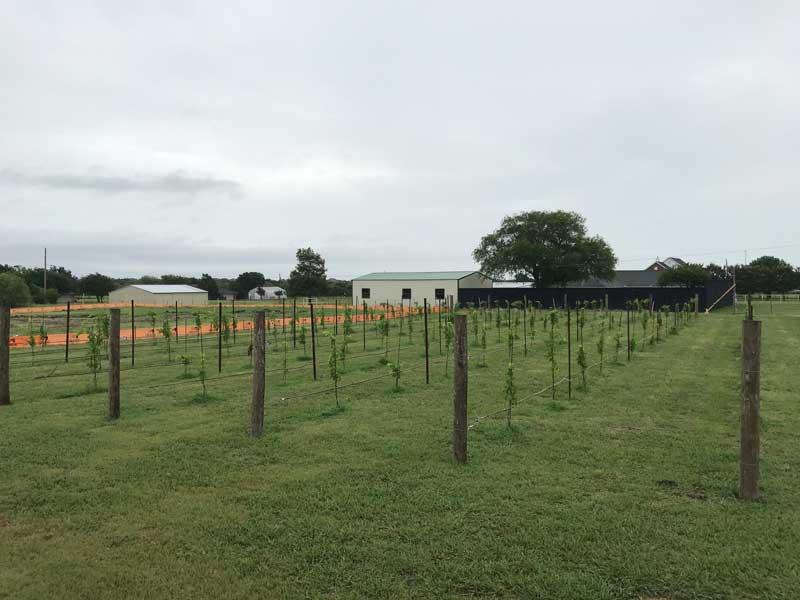 Rosini Vineyards Winery