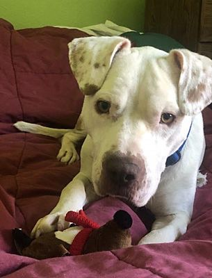 Meet Axel, Blue Ribbon News Pet of the Week