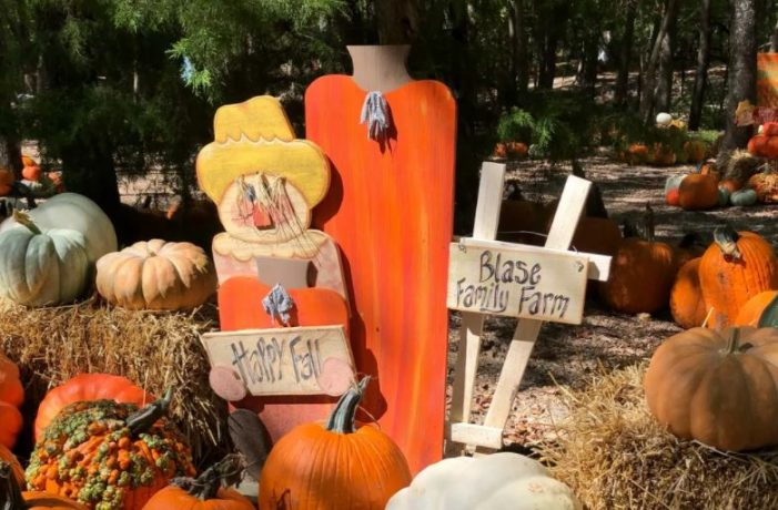 Rockwall's Blase Family Farm Pumpkin Patch set to open by reservation