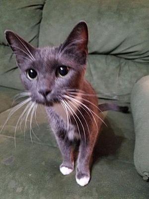 Meet Cersei, Blue Ribbon News Pet of the Week