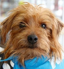 Meet Mr. Mokey, Blue Ribbon News Pet of the Week