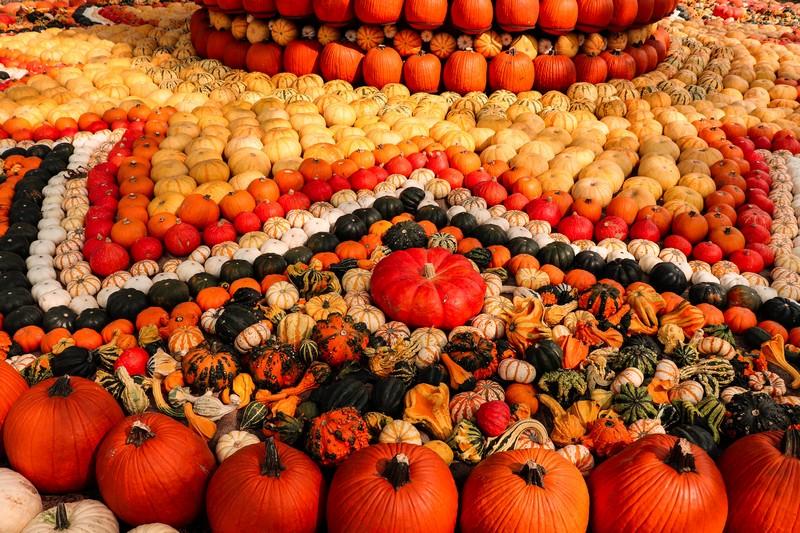 Dallas Arboretum pumpkins