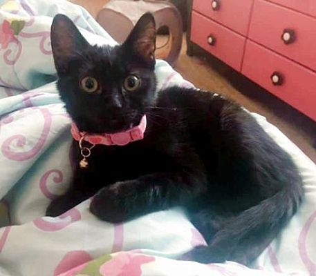 Meet Yoru, Blue Ribbon News Pet of the Week
