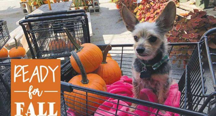Rockwall County Fall Festivities Guide