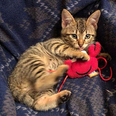 Meet Fritz, Blue Ribbon News Pet of the Week