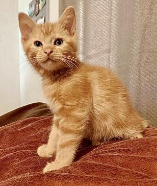 Meet Gunner, Blue Ribbon News Pet of the Week
