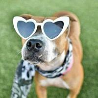 Meet Juno, Blue Ribbon News Pet of the Week