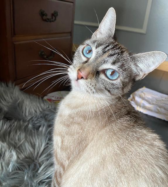 Meet Honey, Blue Ribbon News Pet of the Week