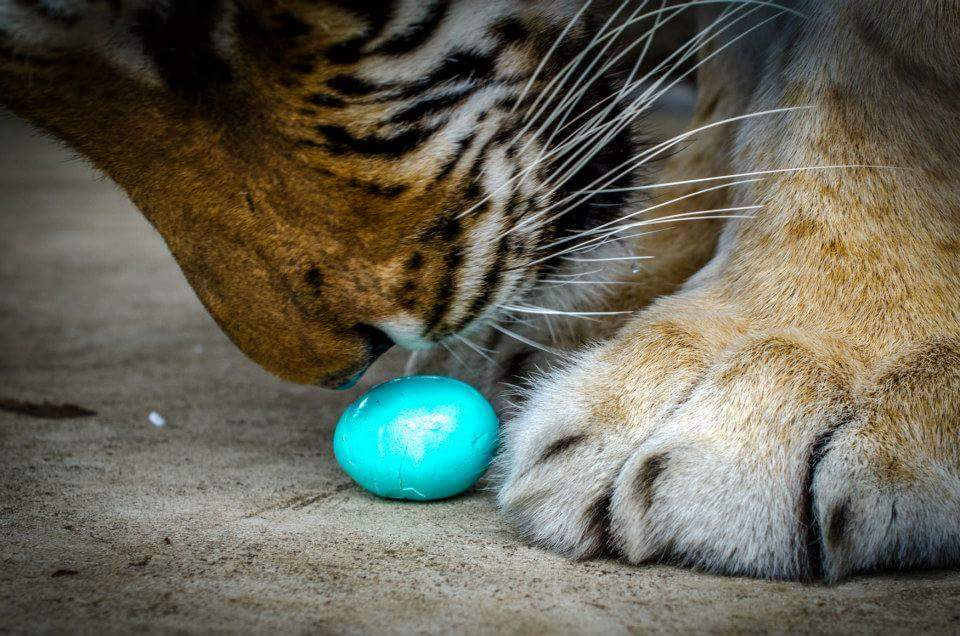 Easter Egg-stravaganza at In-Sync Exotics Wildlife Rescue and Educational Center April 3rd