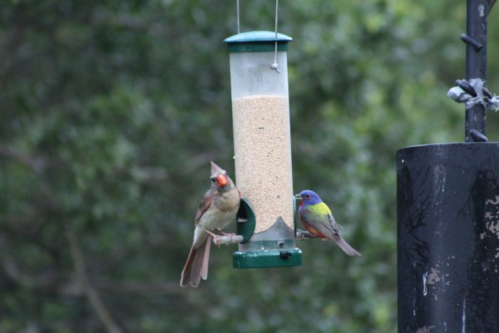 Biologists advise cleaning feeders to prevent spread of diseases among birds