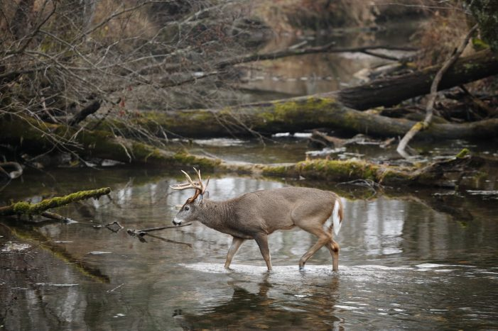 Texas Parks and Wildlife Commission approves hunting regulations changes for 2021-22