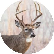 Texas Parks & Wildlife: Managed Lands Deer Program Enrollment is now open for 2021-22 season