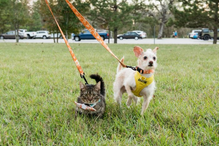Best Friends Animal Society awarded $100,000 grant to supportsaving dogs', cats' lives in shelters across Texas