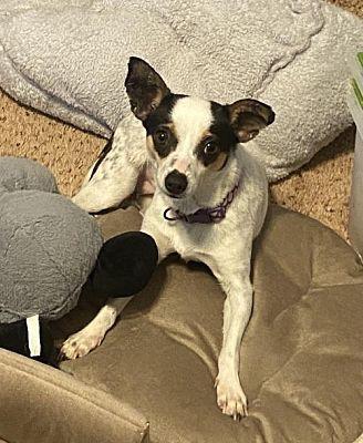 Meet Esther, Blue Ribbon News Pet of the Week