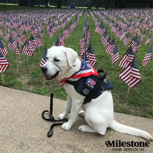 Milestone Millie PUP-Date: Patriot PAWS service dog in training moves to next training phase in prison unit