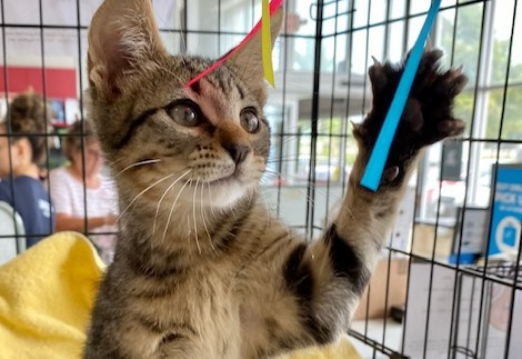 Meet Milo, Blue Ribbon News Pet of the Week