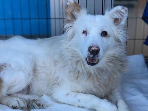 Meet Maddie, Blue Ribbon News Pet of the Week
