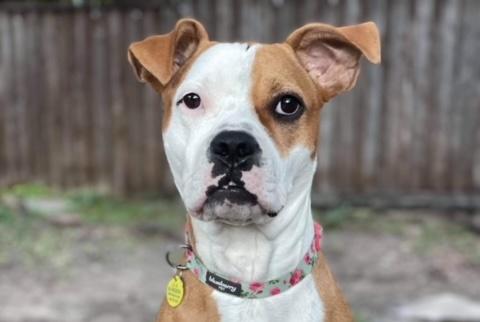 Meet Ellie, Blue Ribbon News Pet of the Week