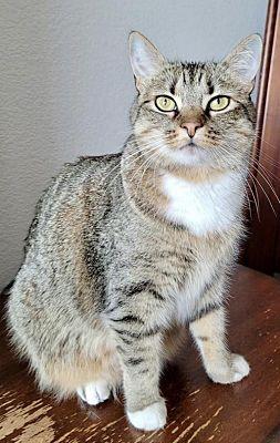 Meet Tiger Lily, Blue Ribbon News Pet of the Week